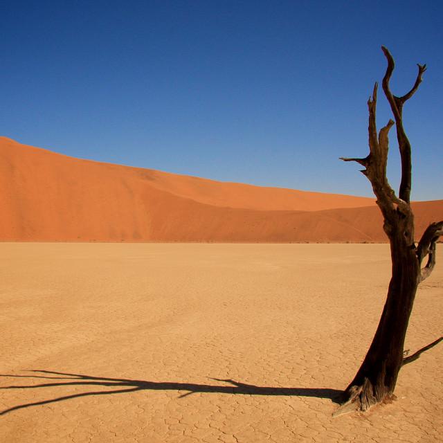 """Deadvlei in Namibia"" stock image"