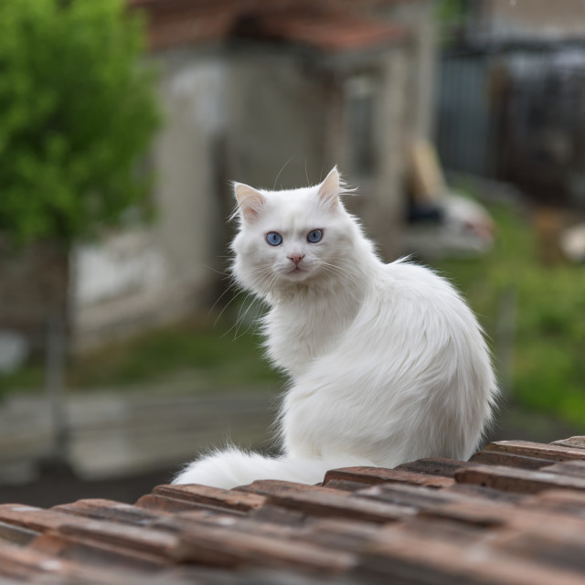 """""""Cat on the roof"""" stock image"""