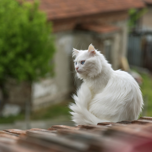 """""""Cat on the roof is looking down"""" stock image"""