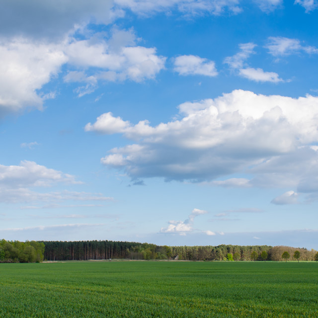 """Rural Landscape"" stock image"