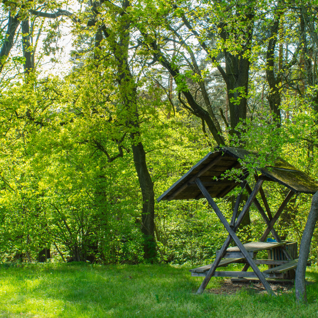 """""""Peaceful Moment In Sunny Forest"""" stock image"""