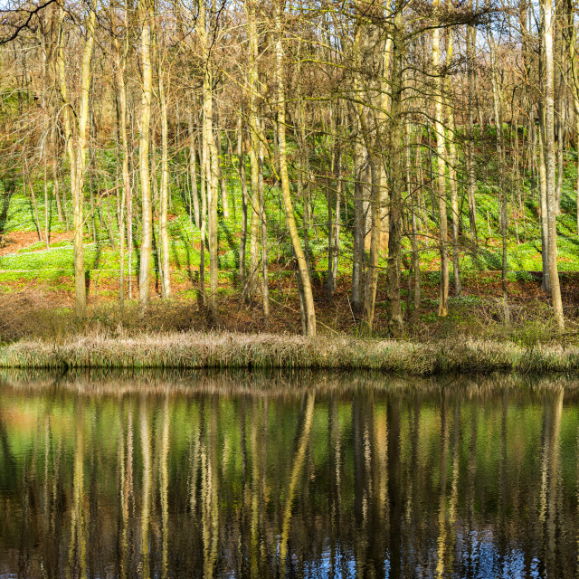 """Idyllic lake in a forest"" stock image"