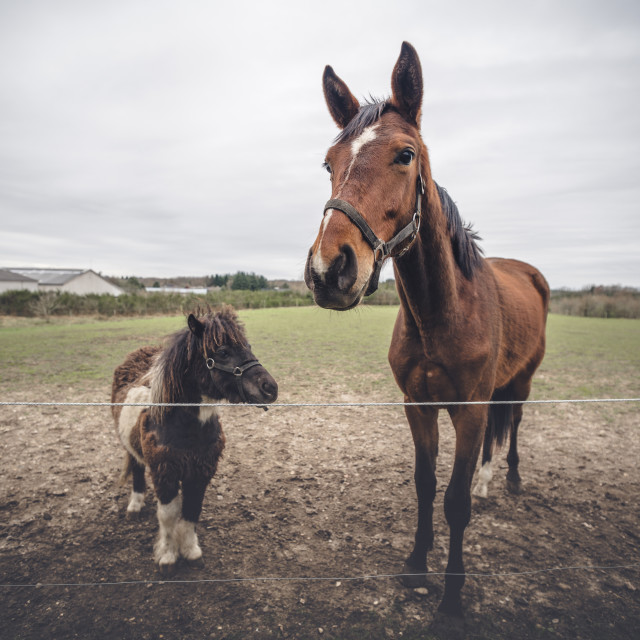 """Horse friends on a farm"" stock image"