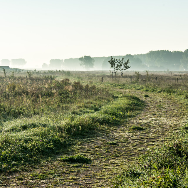 """Rural landscape with path and fog"" stock image"