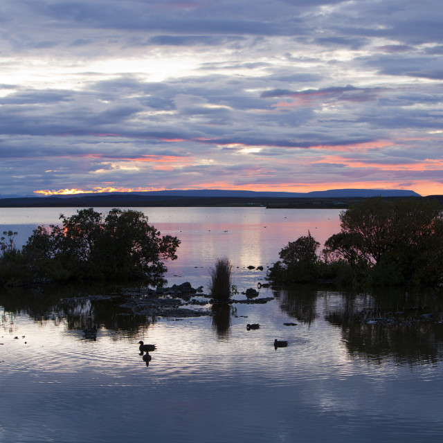 """""""Ducks on Lake Myvatn at sunset in northern Iceland. The lake is an important..."""" stock image"""