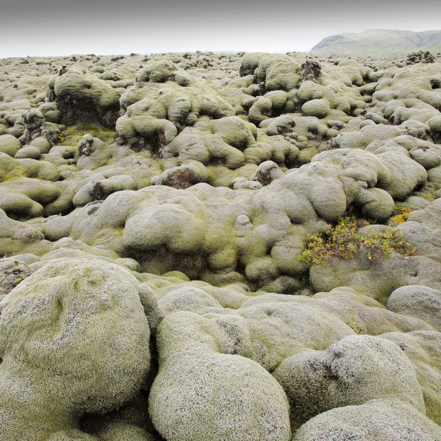"""""""Moss covered lava fields at Kirkjubaejarklauster, Iceland."""" stock image"""
