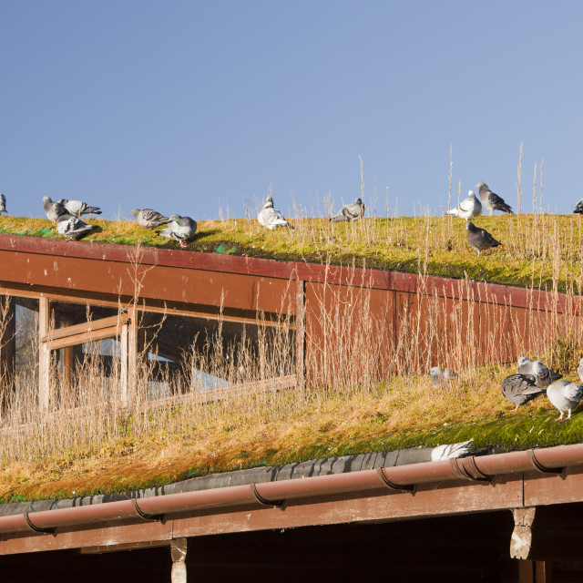 """""""The green building which is the reserve centre at Martin Mere bird reserve..."""" stock image"""
