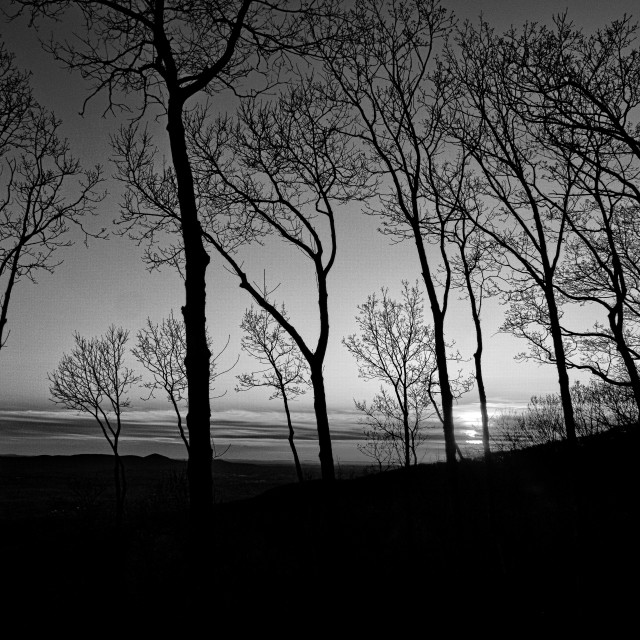 """Sunset Trees (monochrome)"" stock image"