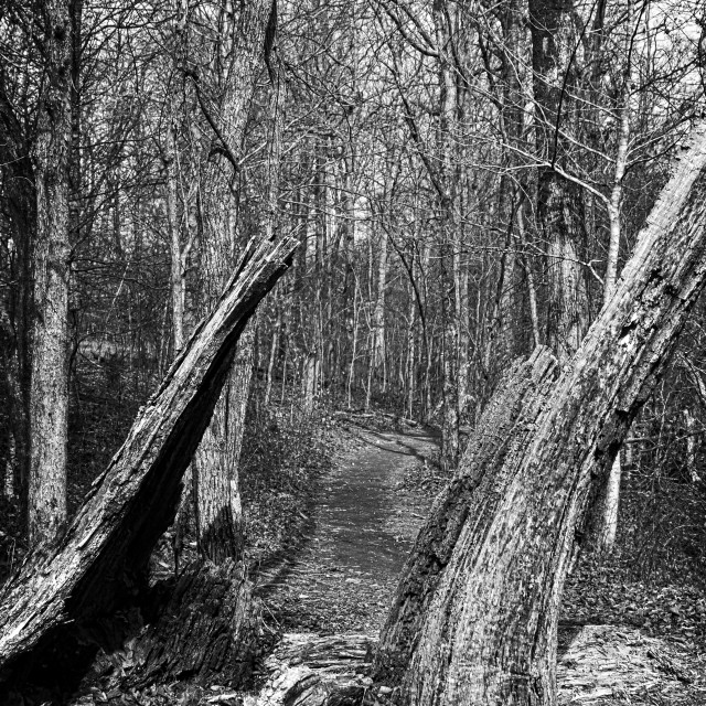 """The Path Through the Woods (B&W)"" stock image"