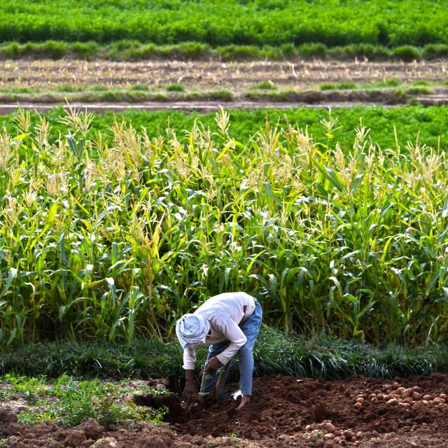 """""""Self-sufficient labor-intensive farming in Morocco"""" stock image"""