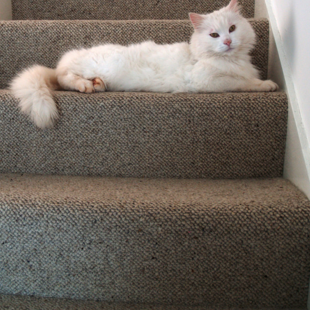 """""""Puss on the Stairs"""" stock image"""