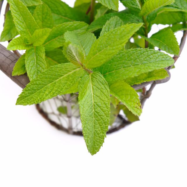 """""""mint leaf in basket"""" stock image"""