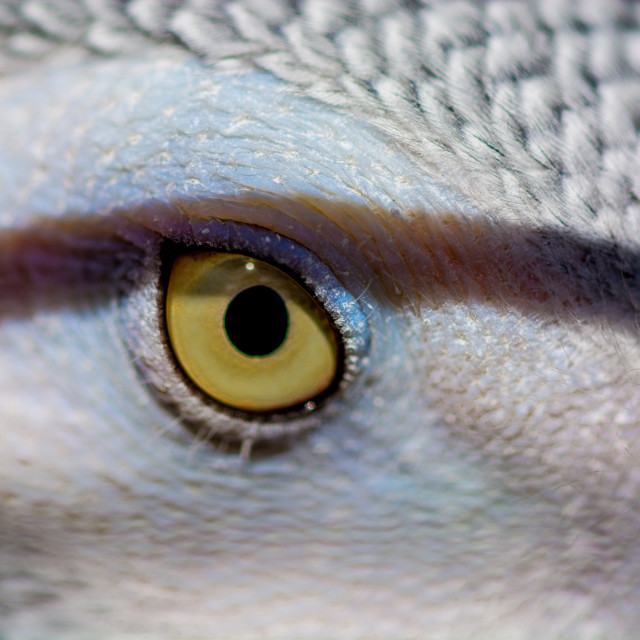 """""""African gray"""" stock image"""