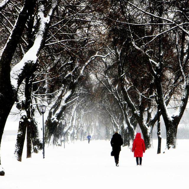"""Snow in Bavaria, winter landscape"" stock image"