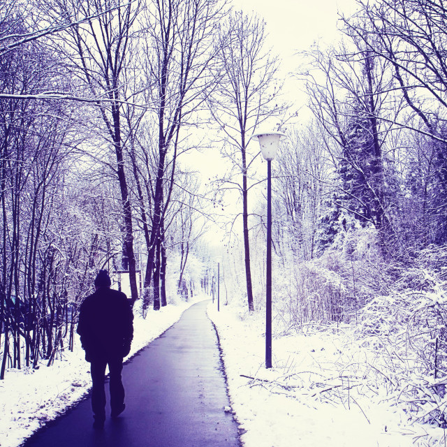 """""""Solitary walk in the wood with winter snow"""" stock image"""