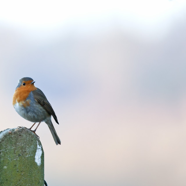 """""""Robin on Post copy space"""" stock image"""