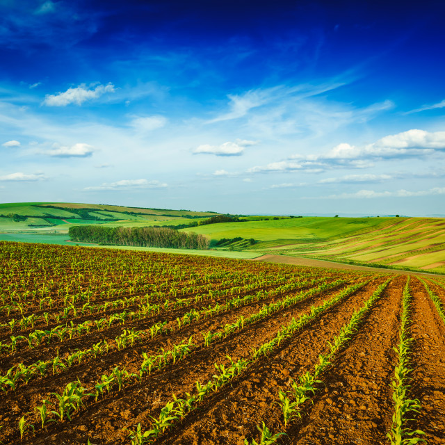 """Rolling fields of Moravia"" stock image"