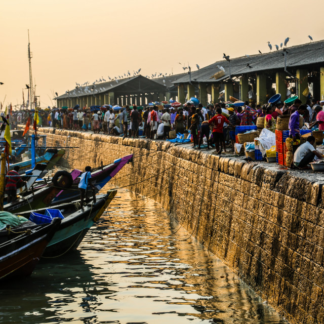 """Morning Fish Market in Mumbai, India"" stock image"
