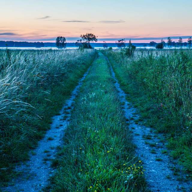 """Meadow at Sunset 