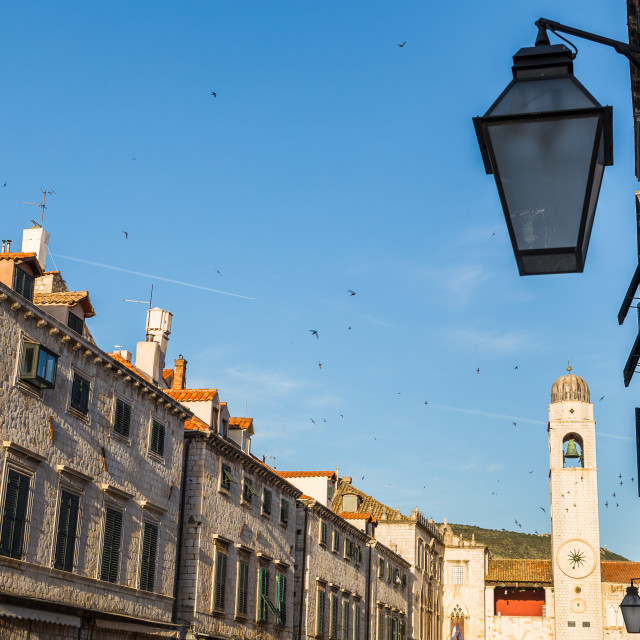 """Flock of Starlings over the Stradun"" stock image"