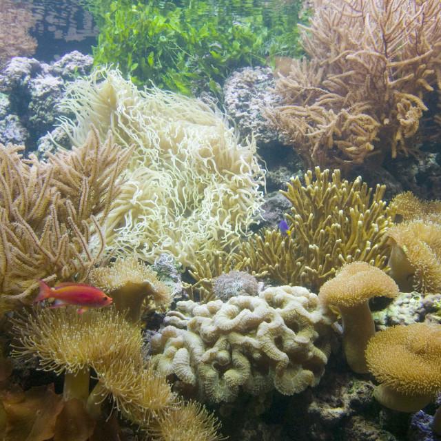 """The Deep Europes deepest aquarium in Hull UK"" stock image"