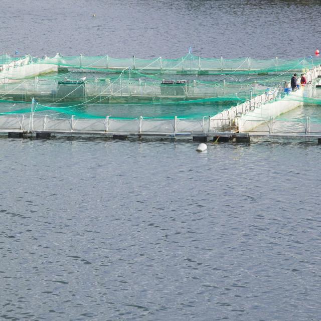 """A Salmon farm at Drumbeg in Assynt Scotland UK"" stock image"