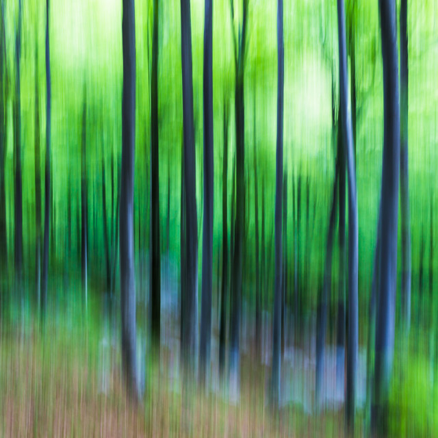 """""""In the wood"""" stock image"""