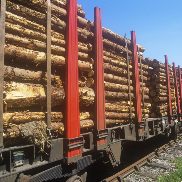 """""""Timber on a train going to a pulp mill, UK."""" stock image"""