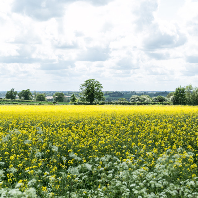 """""""Spring in Northamptonshire"""" stock image"""