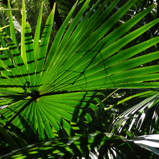 """Translucent Green Fronds"" stock image"