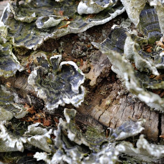 """""""Fungi on trunk macro"""" stock image"""