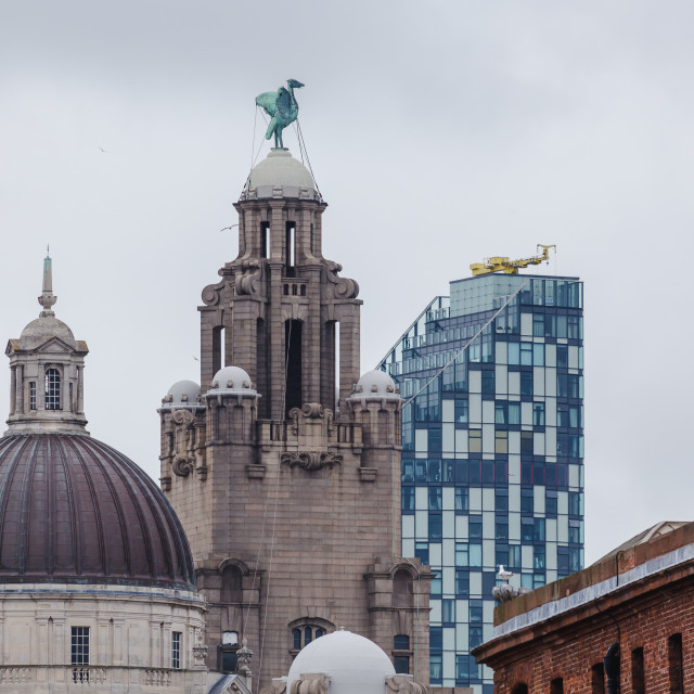 """""""Seagulls swoop over the Liverpool waterfront"""" stock image"""
