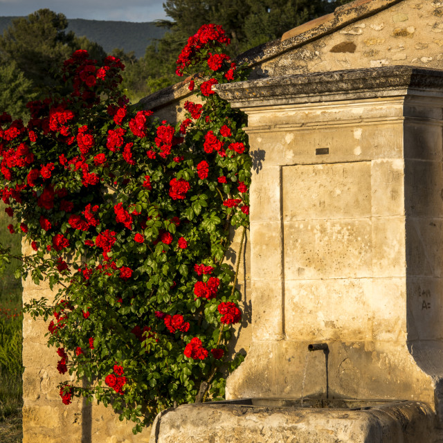 """""""Fountain with red roses"""" stock image"""