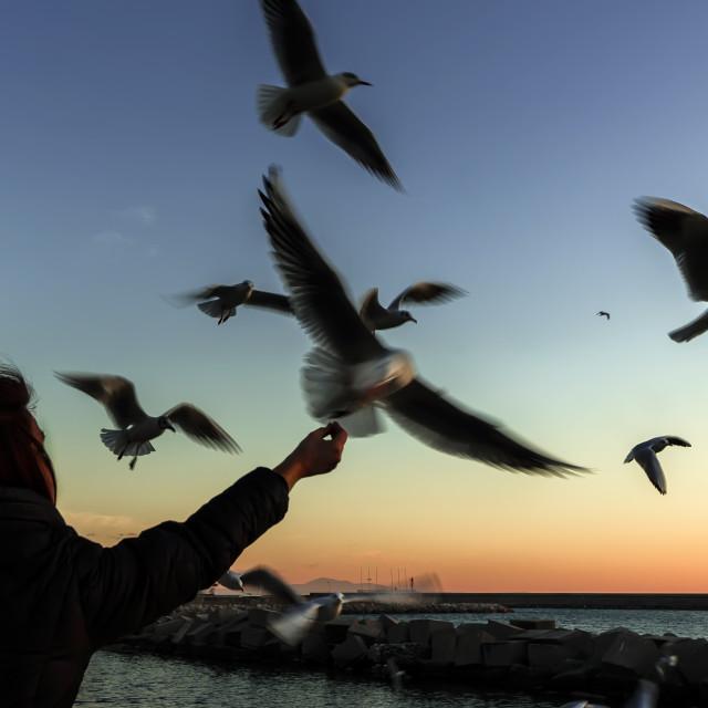 """""""Feeding the gulls at dusk"""" stock image"""