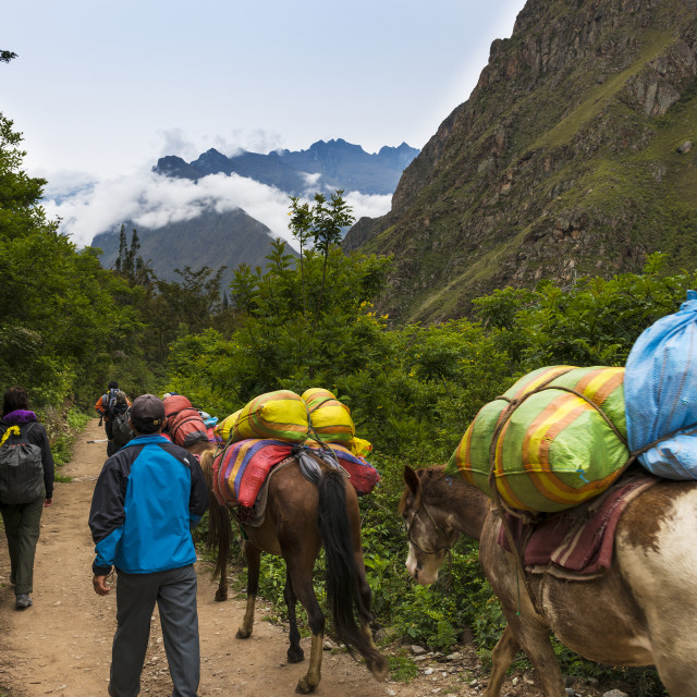 """Sacred Valley, Peru - January 1, 2014: People and horses carrying goods along the Inca Trail, in the Sacred Valley, Peru"" stock image"