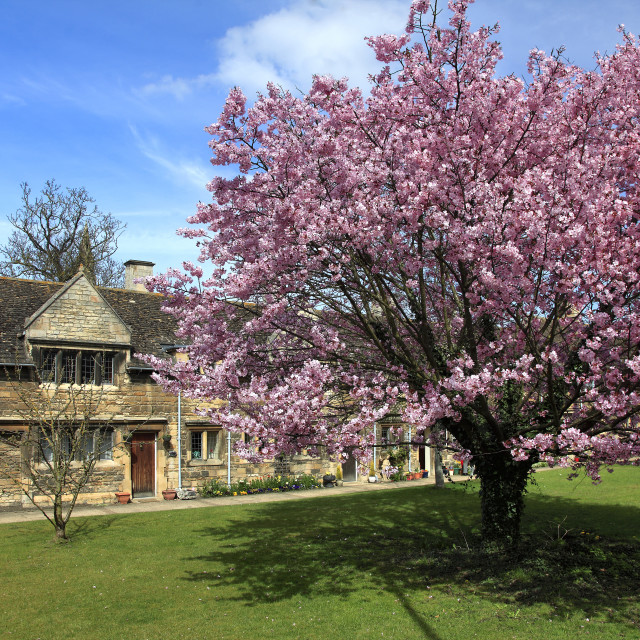 """""""Spring Cherry Trees, Lord Burghleys Hospital Almshouses, Stamford Town,..."""" stock image"""