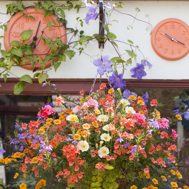 """A hanging basket and garden furniture on a shed in Clitheroe, Lancashire, UK."" stock image"