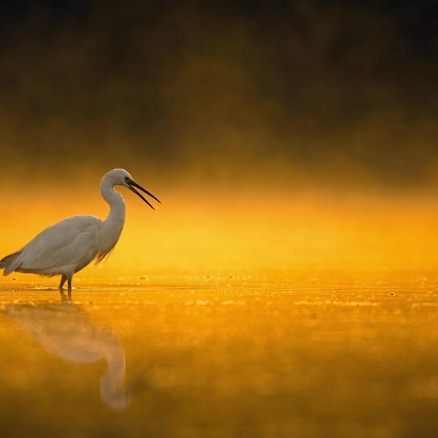 """Hunting at sunrise"" stock image"
