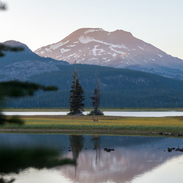 """Deer reflection on mountain lake"" stock image"