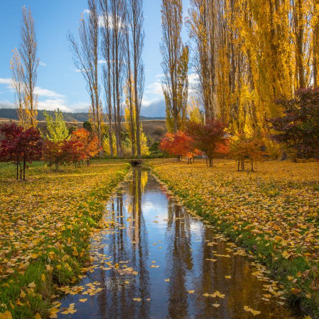 """Autumn in Tasmania"" stock image"