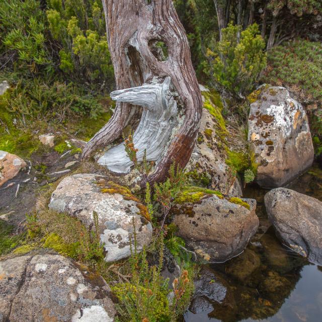 """Nature detail, Tasmania"" stock image"