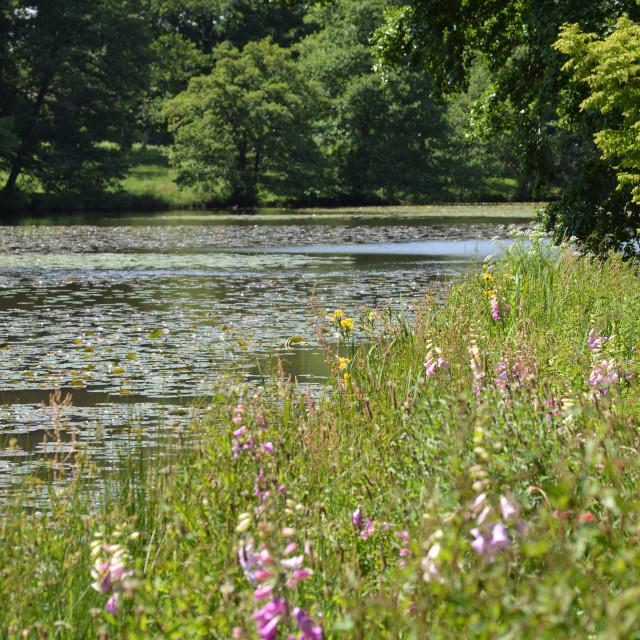 """English Riverbank in Springtime."" stock image"