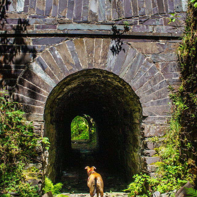 """""""Into The Tunnel"""" stock image"""