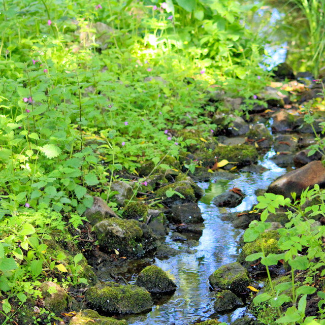 """""""Gentle Brook"""" stock image"""