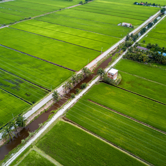 """""""Aerial View - Green Paddy Fields"""" stock image"""