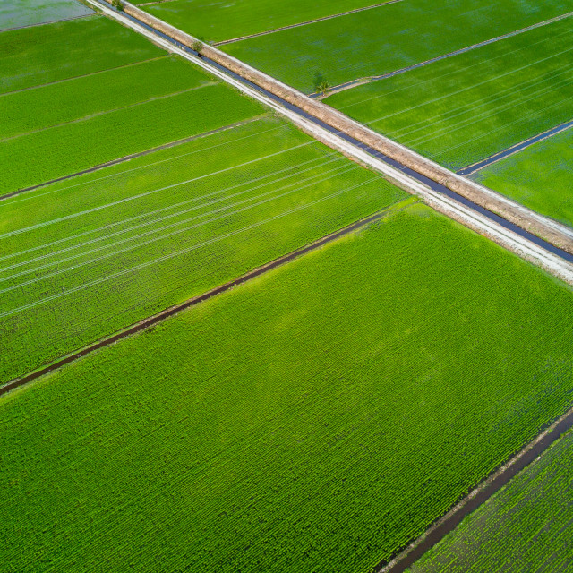 """Aerial View - Green Paddy Field from above"" stock image"