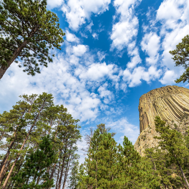 """Devils Tower and Trees"" stock image"