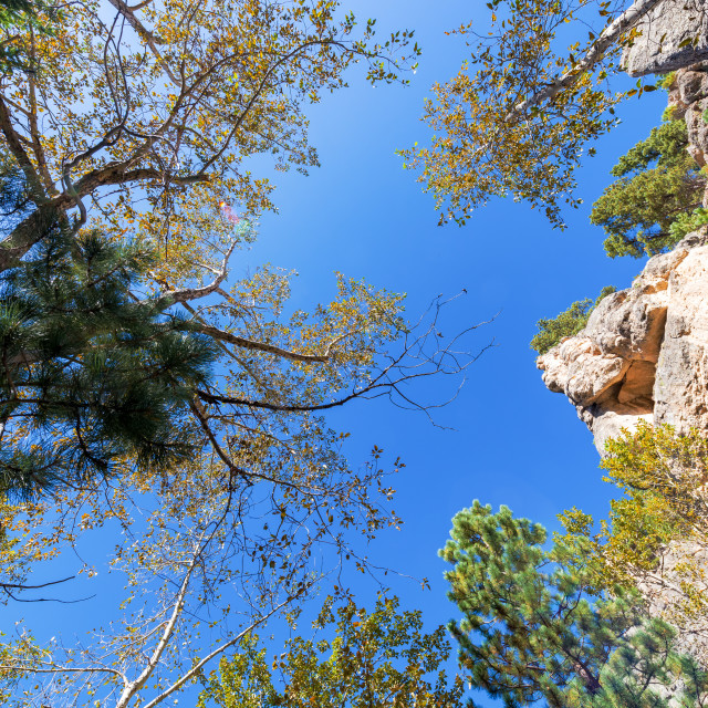 """Looking up in South Piney Canyon"" stock image"