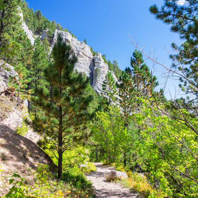 """Hiking Trail in Wyoming Vertical"" stock image"