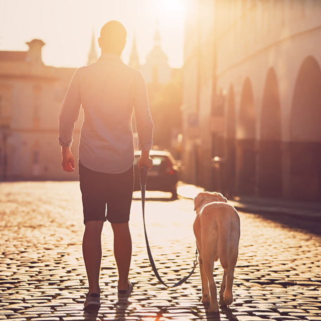 """Morning in the city. Young man walking with his dog on the old street at golden sunrise. Prague, Czech Republic"" stock image"